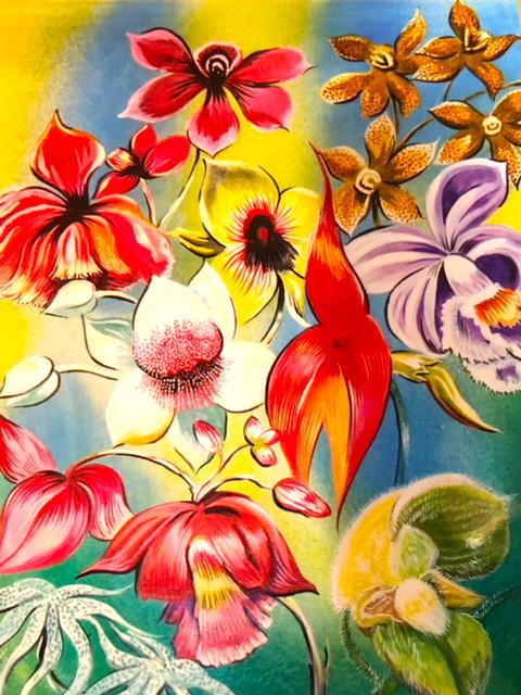 Marcelas Village - Hugo Bejar - Orchid